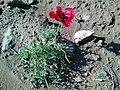 Poppy Bahar 6.jpg