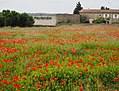 Poppy Field (19357558781).jpg