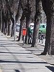 Postman, post box, postal bicycle, 2019 Kalocsa.jpg