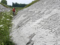 Prairie Bluff Chalk Formation Starkville MS 052510.JPG