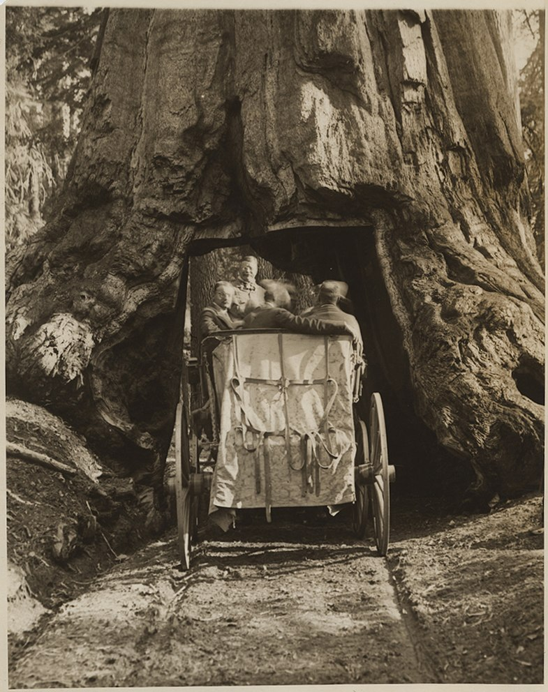 President Theodore Roosevelt Driving Through the Wawona Tunnel Tree, in Yellowstone National Park (14994749857)