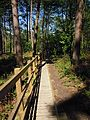 Pretty Corner Woodland boardwalk, 12 May 2012.JPG