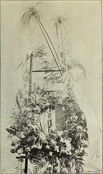 File:Price list of bulbs (1896) (20551986691).jpg