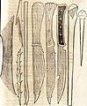 Prodigiorvm ac ostentorvm chronicon - quae praeter naturae ordinem, motum, et operationem, et in svperioribus and his inferioribus mundi regionibus, ab exordio mundi usque ad haec nostra tempora, (14804223003).jpg