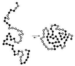 Protein folding schematic