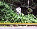 Puerto Rico Highway 191 - 4.jpg