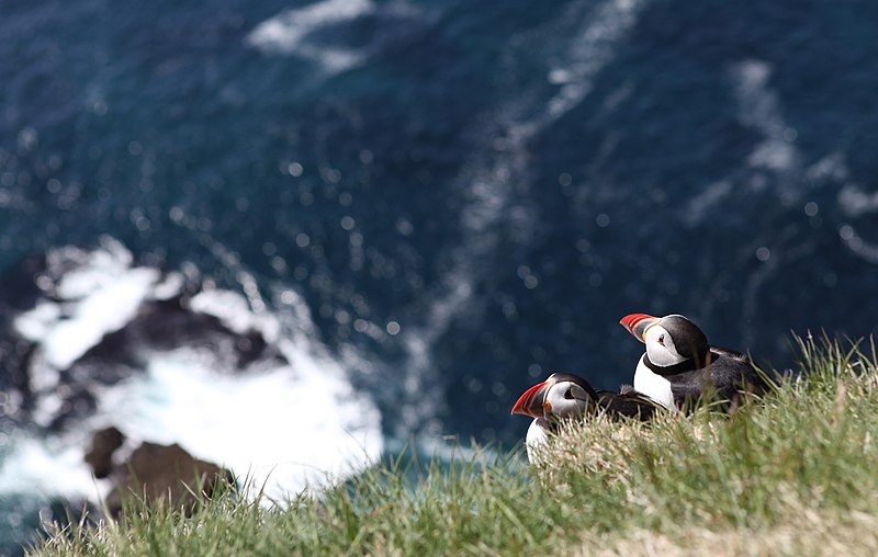 File:Puffin's cliff - panoramio.jpg