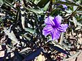 Purple Colour Unknown Flower.jpg