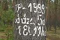 Puszcza Notecka, okolice Debogory (3).JPG