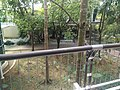 Putrajaya Botanical Garden in Malaysia 16.jpg