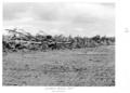 Queensland State Archives 4345 Windrows prior to burning at the Childers Soldiers Settlement 1950.png