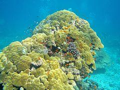 Récif Mayotte ouest