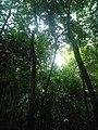 Rừng cây trong địa đạo Củ Chi.jpg