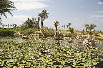 Plantas acuáticas del lago en el Botanicactus