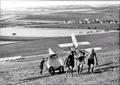 Rana1935v.png