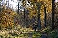 Randalstown forest (2) - geograph.org.uk - 618341.jpg