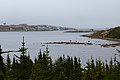 Red Bay Labrador 01.jpg