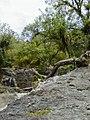 Regenwald Tobago.jpg