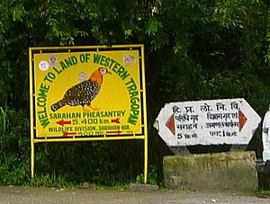 Western tragopan - Sign about Western tragopans near Sarahan, Himachal Pradesh, India
