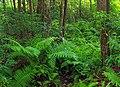 Reynolds Spring Natural Area (5) (29374697572).jpg