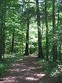 Ricketts Glen State Park Waterfalls Trail.jpg