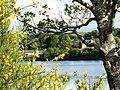 River Awe, Loch Etive - geograph.org.uk - 1355459.jpg