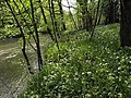 River Tamar - geograph.org.uk - 794832.jpg