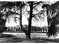 River Torrens Adelaide(GN05918).jpg