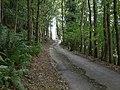 Road through the trees at Bryniau-mawr Bank - geograph.org.uk - 257338.jpg
