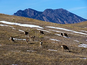 Deer at Rocky Flats National Wildlife Refuge w...