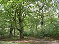 Roydon Woods nature reserve, New Forest - geograph.org.uk - 60470.jpg