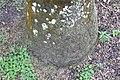Roystonea regia 10zz.jpg