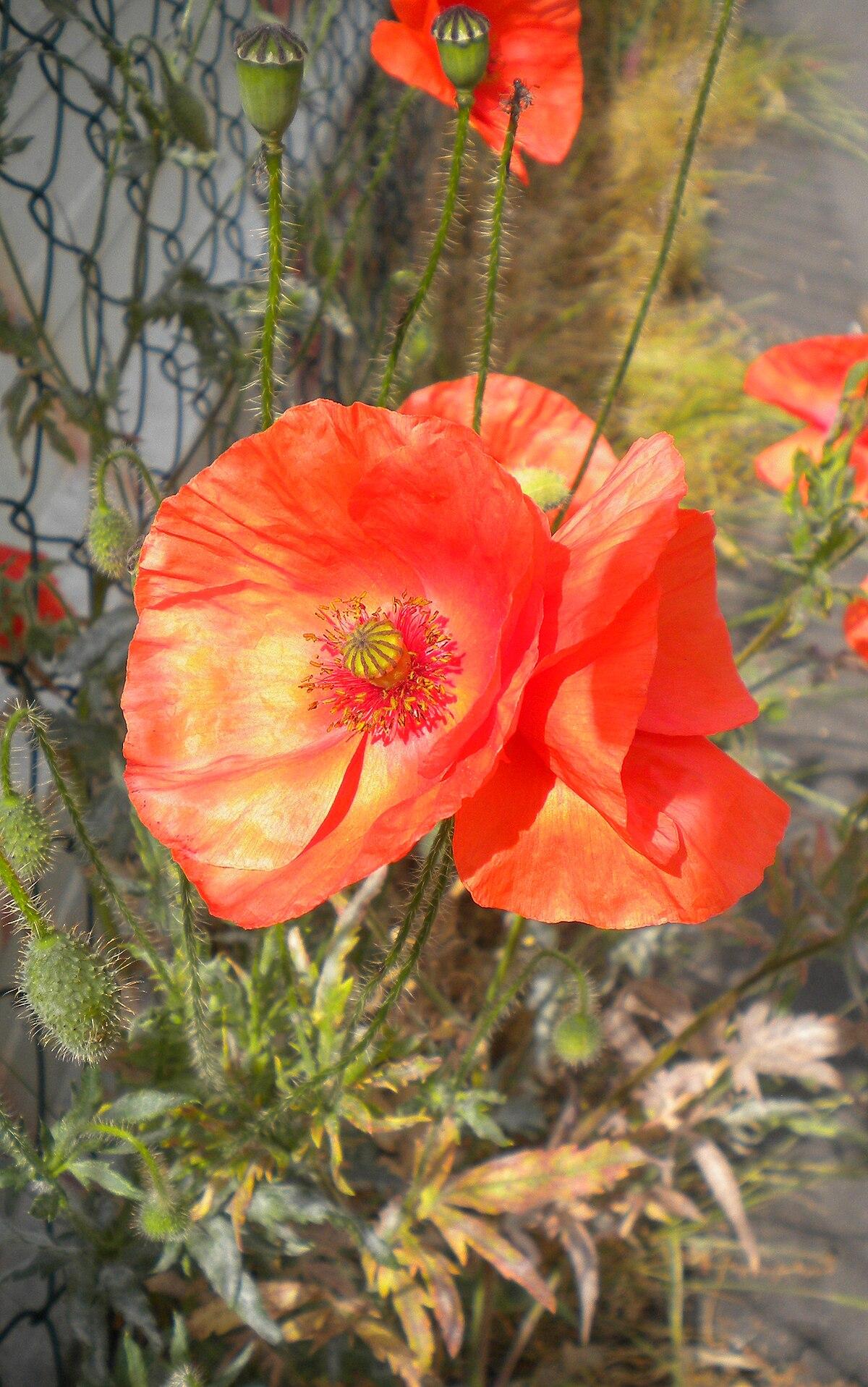 seth photography orange by