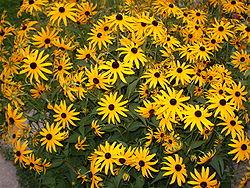 Комнатные цветы фото самых красивых с описанием ухода
