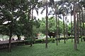SZ 深圳 Shenzhen 蛇口 Shekou Nanshan 四海公園 Sihai Park plants and trees Sept 2017 IX1 05.jpg