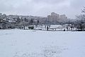 Sacher Park January 2014-001.jpg