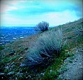 Sagebrush Overlooking Valley.jpg - panoramio.jpg