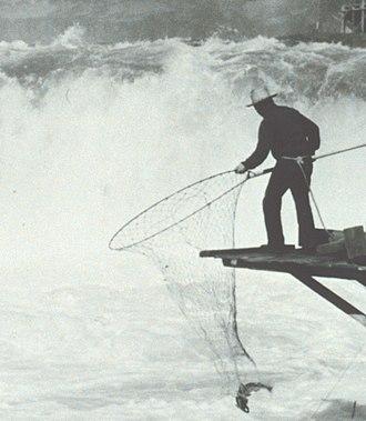 Salmon cannery - Native American fishing salmon with loop net 1938