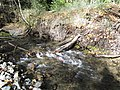 Salmon run at Adams River 2010 (5074650886).jpg