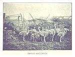 Salmond(1896) pg139 Ostrich and Chicks.jpg