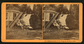Sawing section of the Original, 98 feet at base, by Muybridge, Eadweard, 1830-1904.png