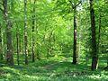 Schlosspark Lanke 01.jpg