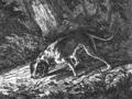 Schweißhund.png