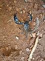 Scorpion (16).jpg