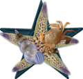 Sea Bio Barnstar Hires.png