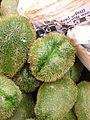 Sechium edule chayote espinas spiky chayote.jpg