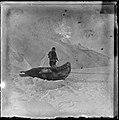 Seljakt på Rossbarrieren, 1911 1912 (7654806542).jpg