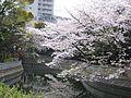 Sendaiborigawa park , Koto ward - panoramio (1).jpg
