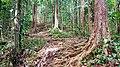 Sentier dans la forêt tropicale au Saut des Trois Cornes.jpg