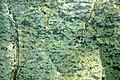 Serpentinite (East Dover Ultramafic Body, Ordovician; Adams Brook, east of East Dover, Vermont, USA) 4.jpg